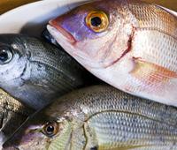 魚介は地元、いわきの漁港から